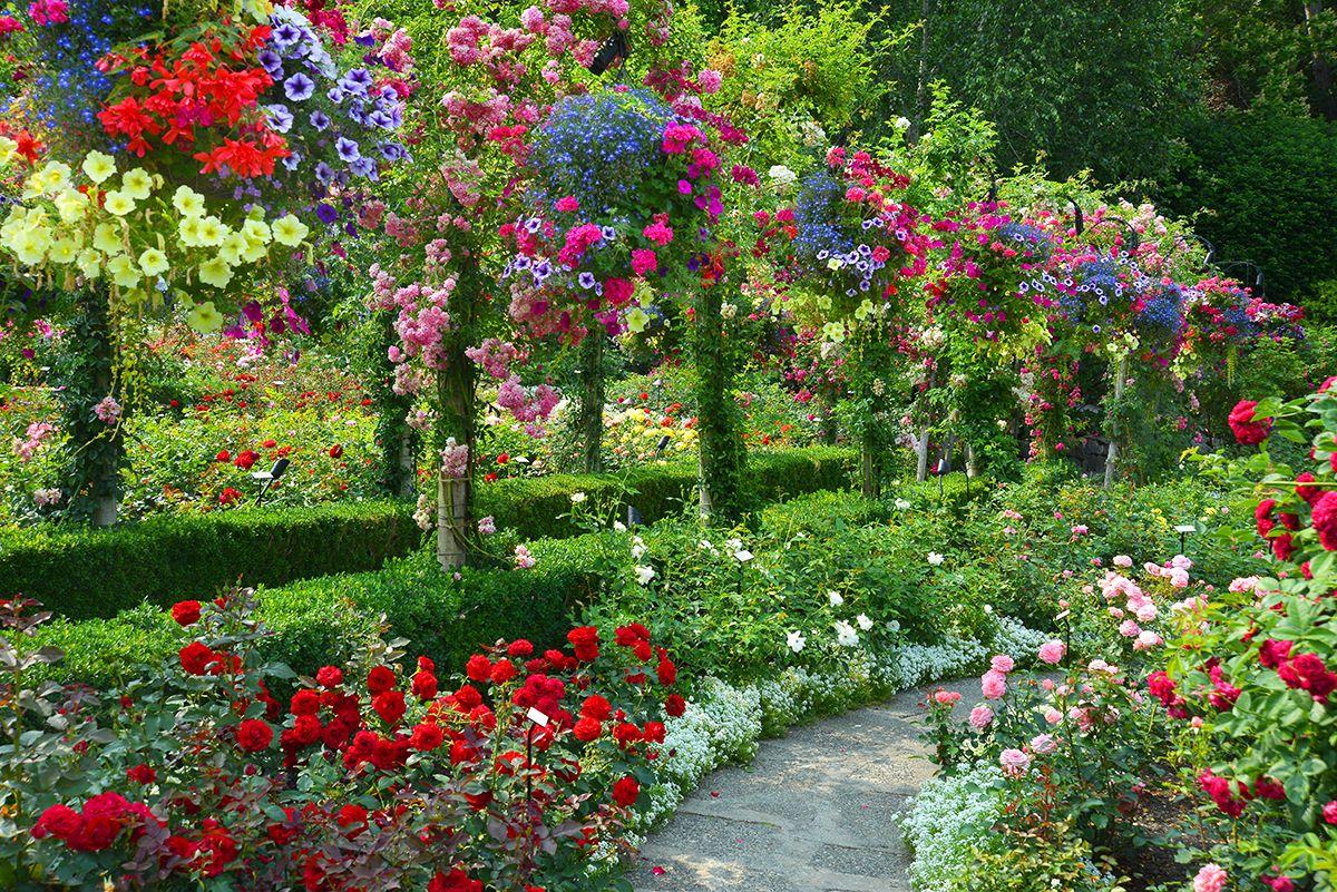 Natural beauty image wallpaper
