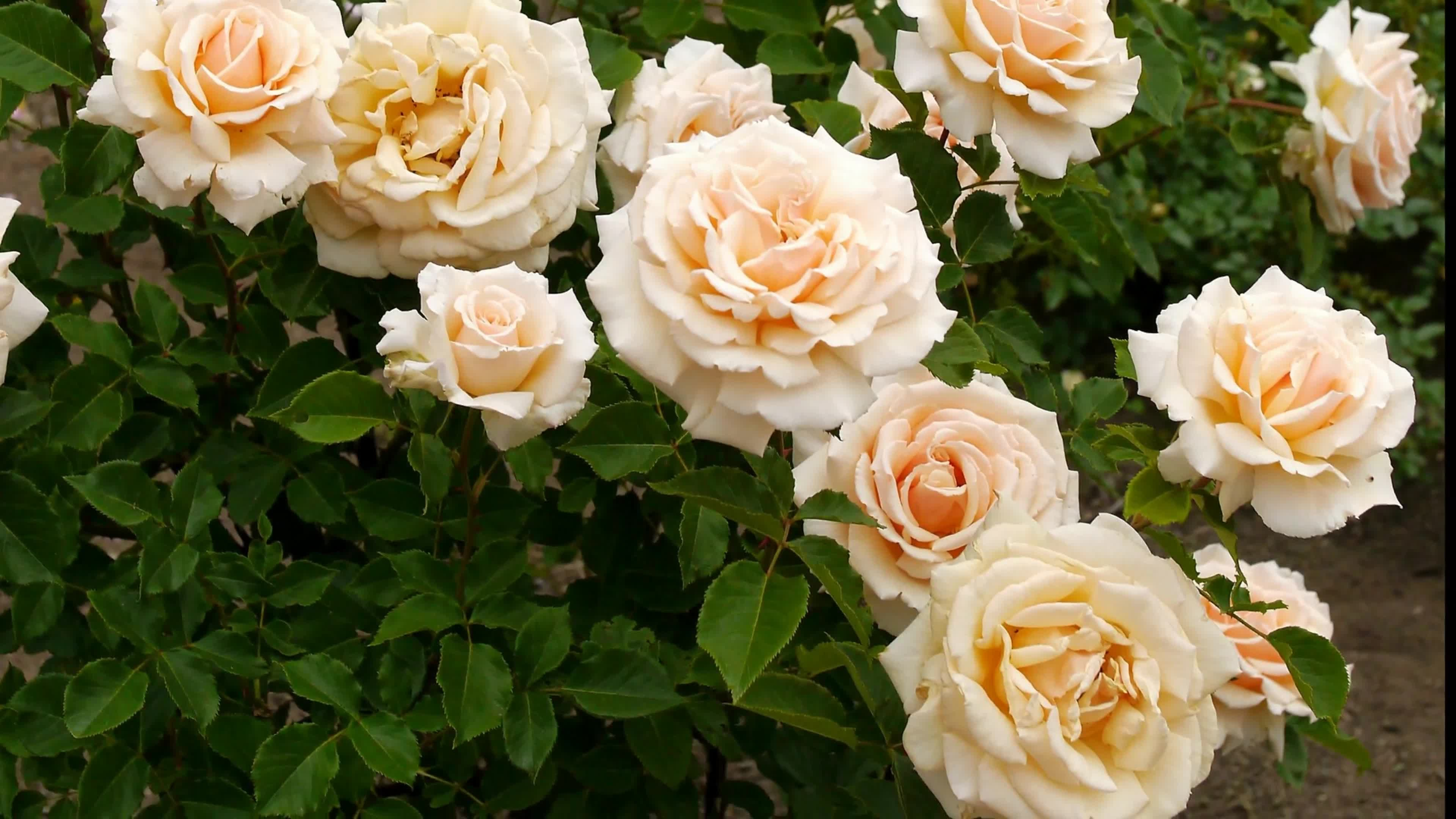 Very beautiful flowers images