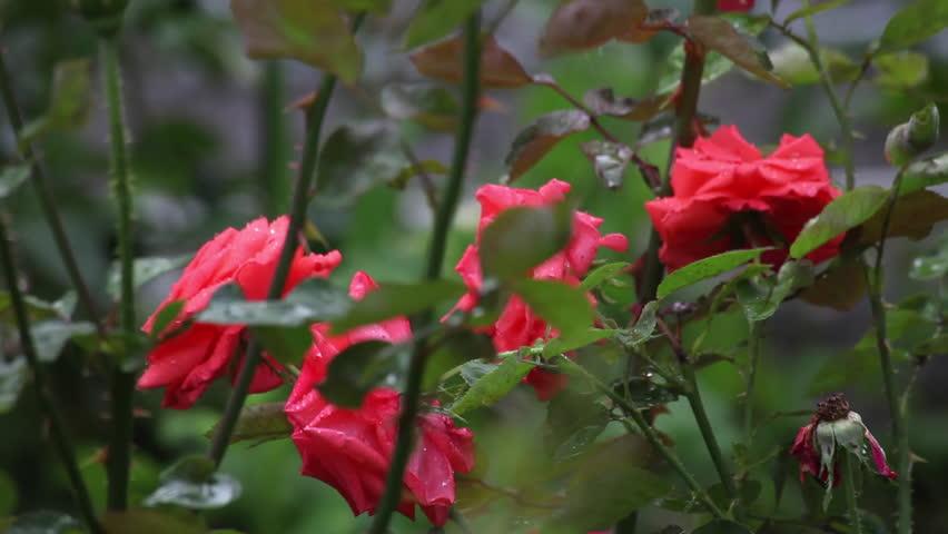 natural Beauty image