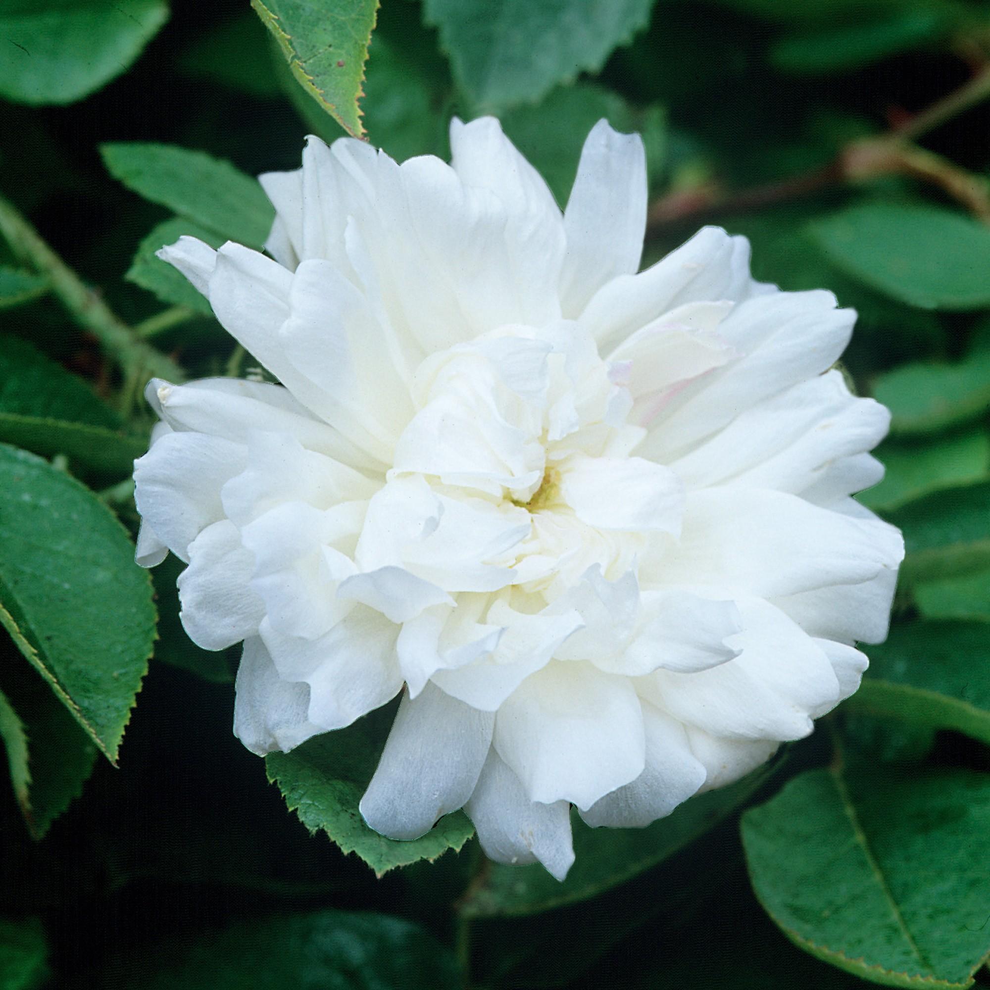 World beautiful flowers image