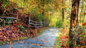 beautiful nature hd image